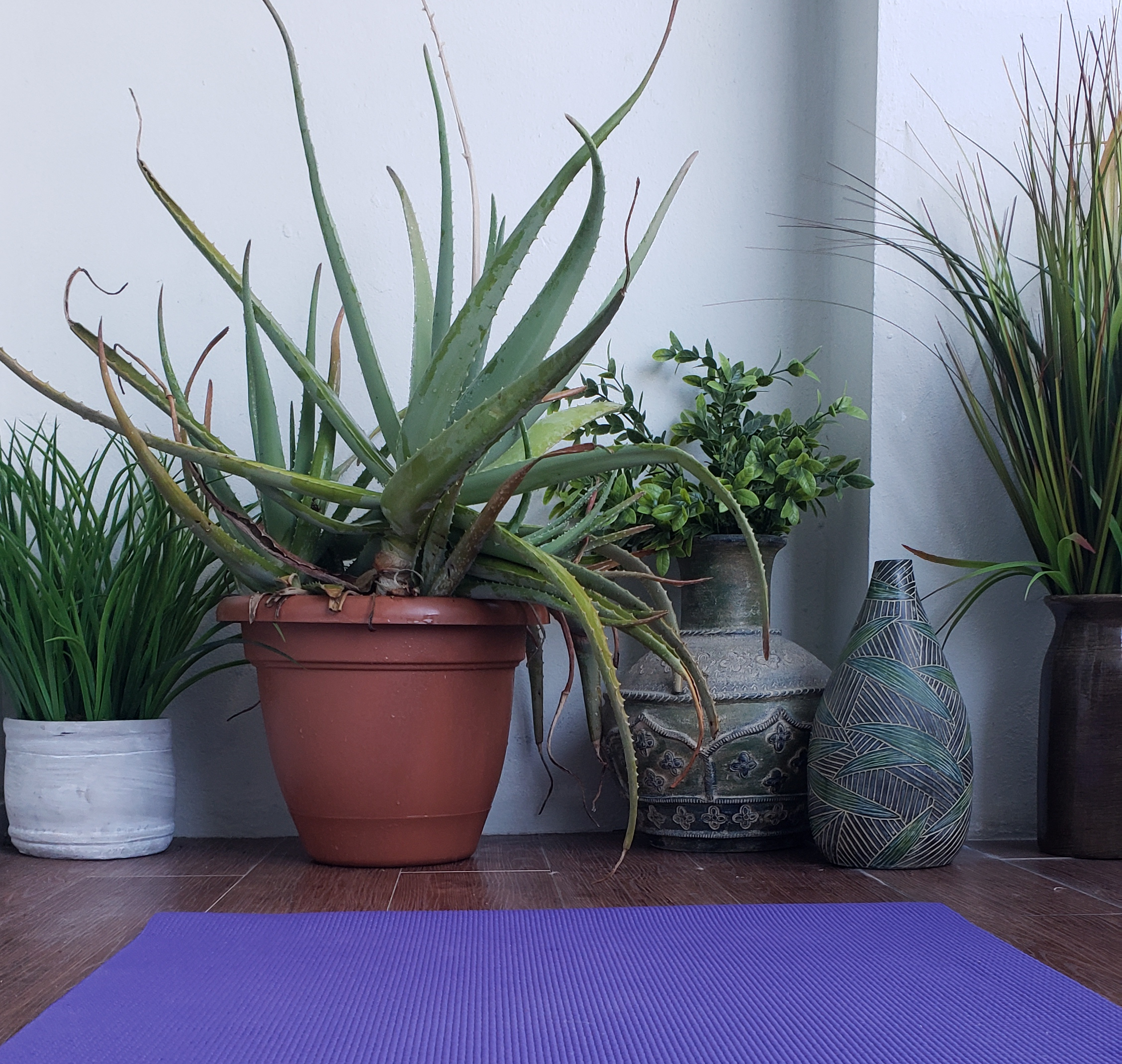 make a yoga studio at home with plants